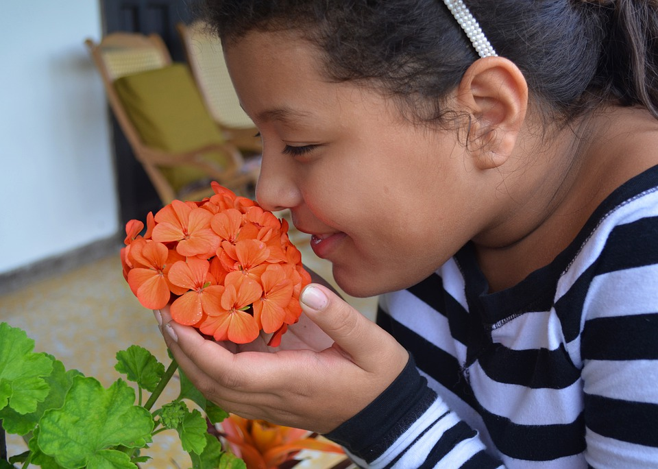 flower-5221238_960_720